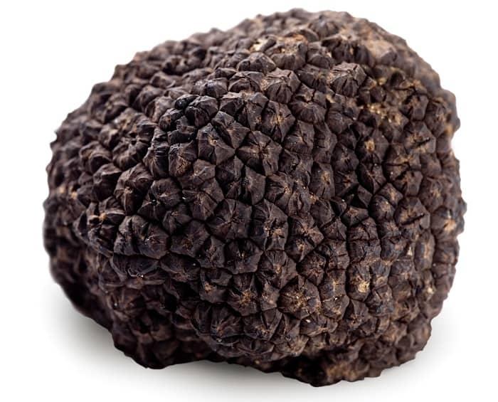 truffle mushroom