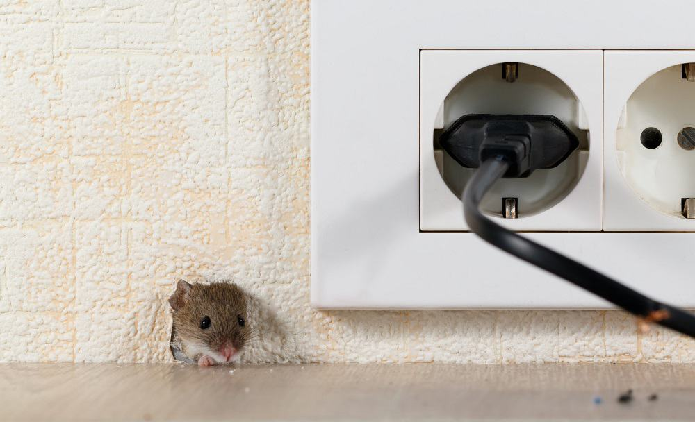 covering mouse hole